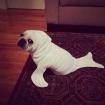 Pug Seal