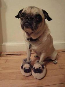OMG IT'S A PUG IN PUG SLIPPERS. INPUGTION!