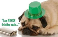 Paddy's Day Pug 2